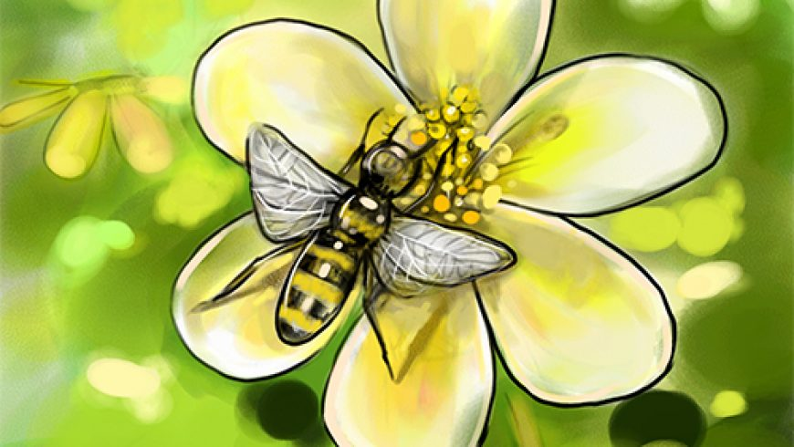Pollination Support through Beekeeping